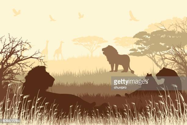African Safari background with roaring Lions, Lioness and cubs