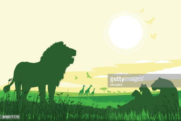 african safari background with roaring lions, lioness, cubs and giraffes - lion stock illustrations