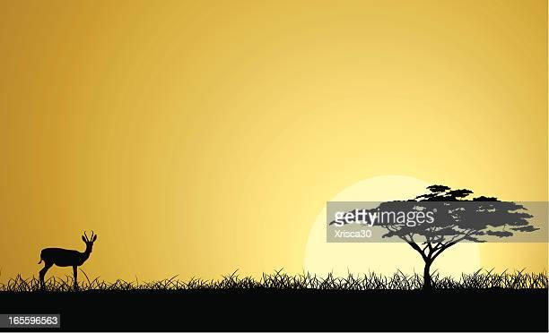 african safari - safari stock illustrations, clip art, cartoons, & icons
