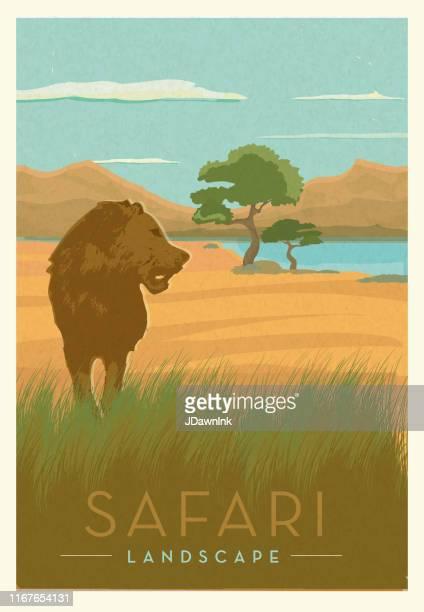 illustrations, cliparts, dessins animés et icônes de safari africain avec la conception scénique d'affiche de lion avec le texte - afrique paysage