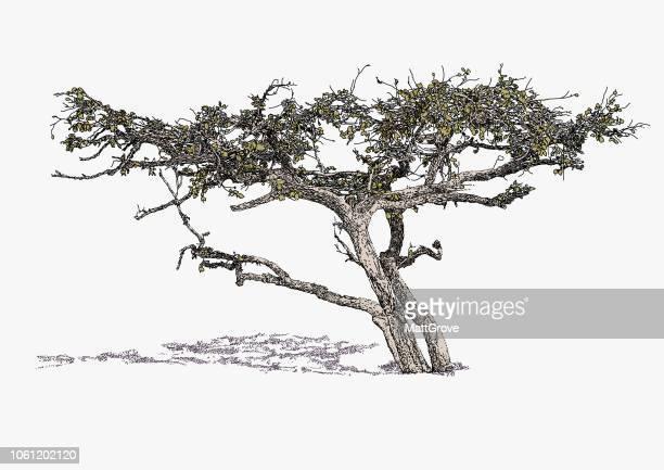illustrations, cliparts, dessins animés et icônes de arbre de la savane africaine - afrique paysage