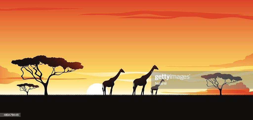 African savannah : stock illustration