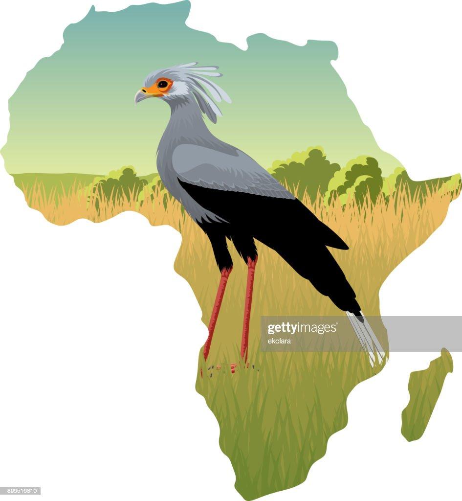 African savannah with secretary bird - vector illustration