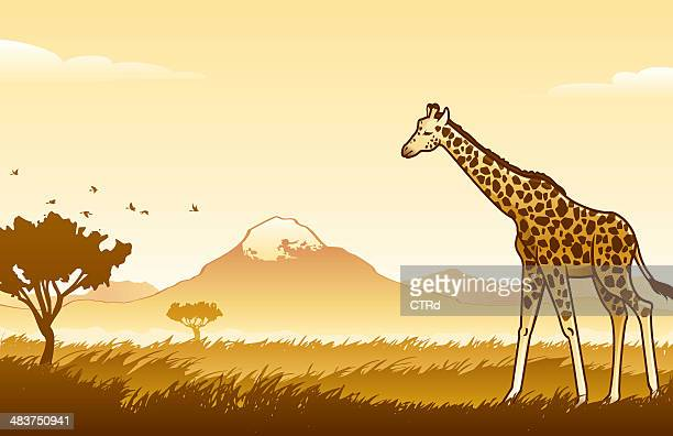 African Wilderness Scene