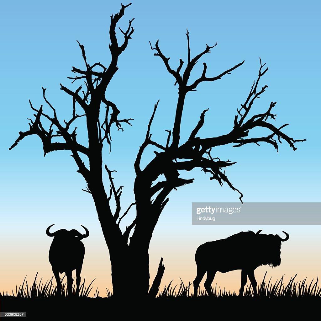 African Wildlife Silhouette