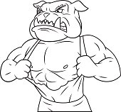 Aggressive bulldog tearing his shirt 2