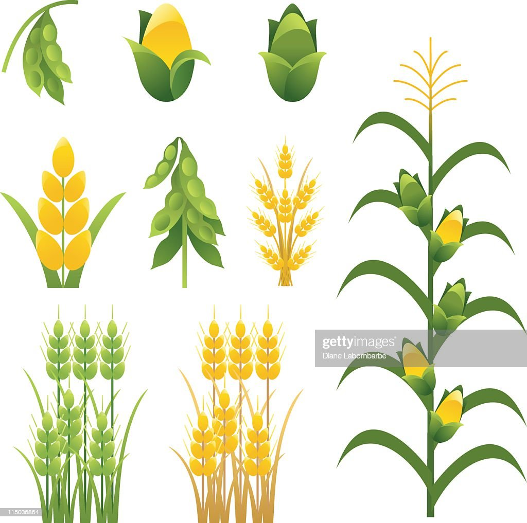 Agriculture farm crops and plants Icons set of nine
