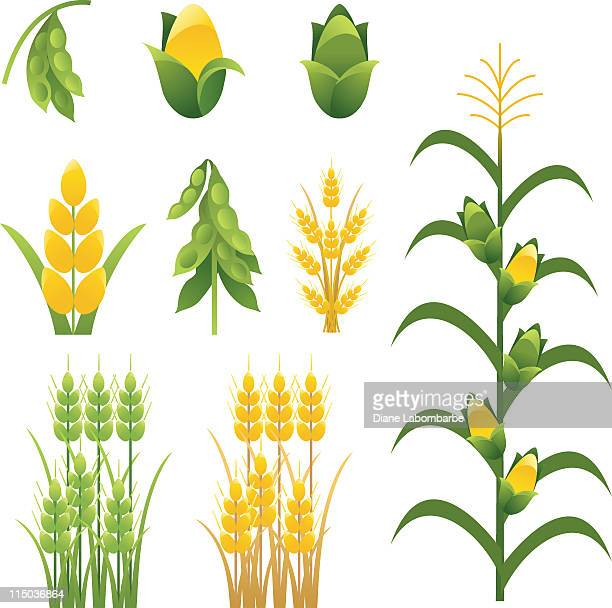 agriculture farm crops and plants icons set of nine - corn stock illustrations, clip art, cartoons, & icons