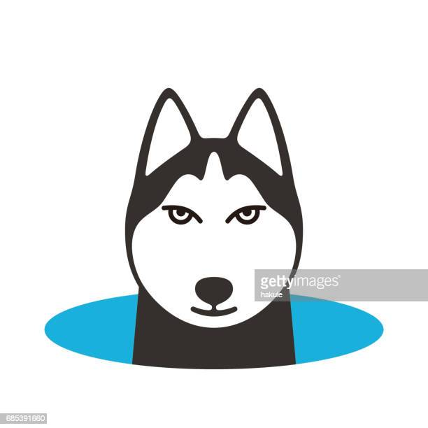 Alaskan Malamute dog on the hole,watching, vector illustration