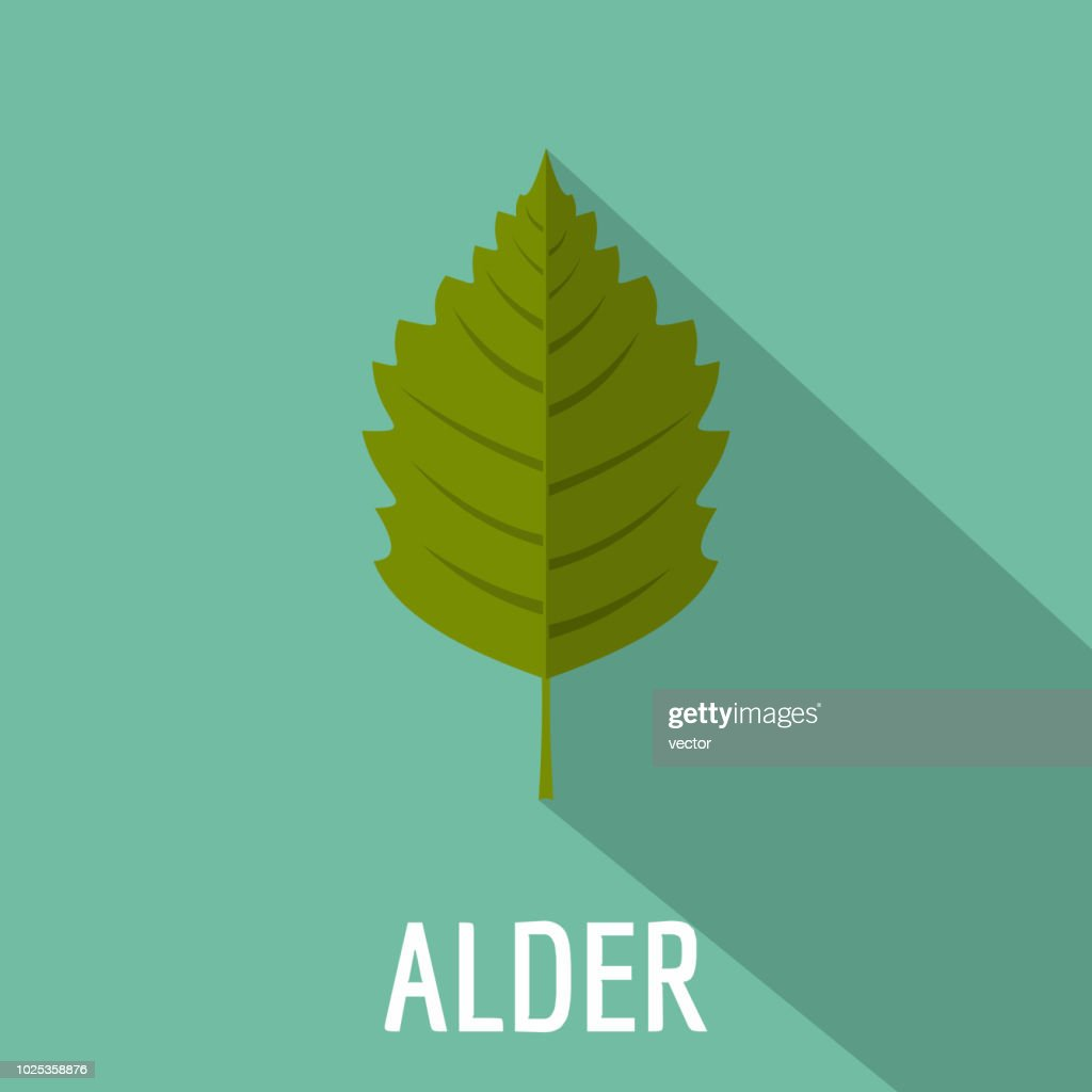 Alder leaf icon, flat style