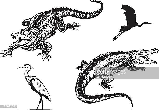 alligator and blue heron - alligator stock illustrations, clip art, cartoons, & icons