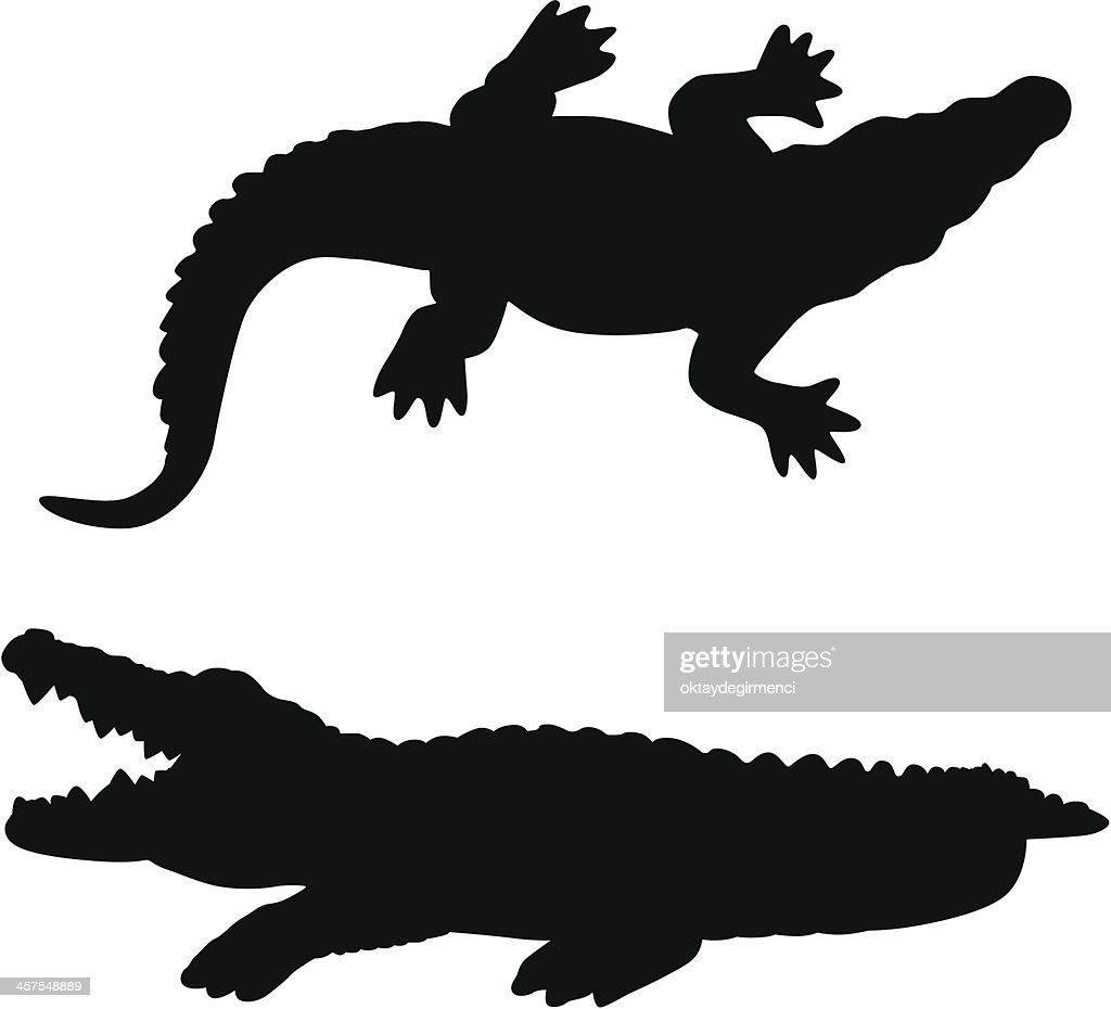 alligator vector art getty images