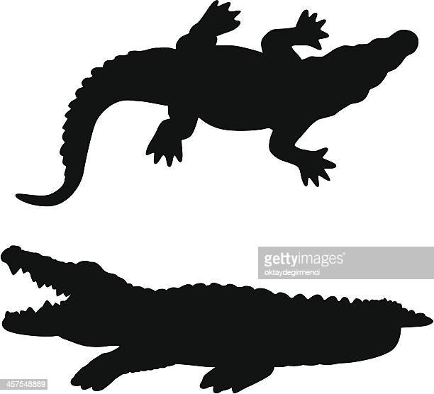 illustrations, cliparts, dessins animés et icônes de alligator - crocodile