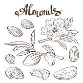 Free Branch of flowering almond tree Stock Photo