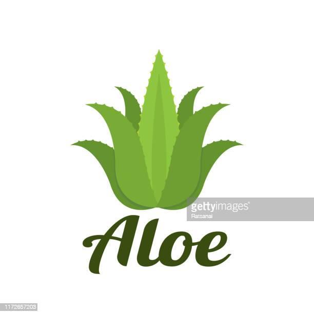 aloe - aloe vera plant stock illustrations
