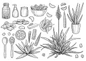 Aloe vera collection, illustration, drawing, engraving, ink, line art, vector