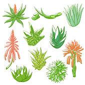Aloe vera hand drawn set