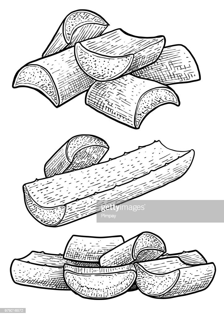Aloe vera leaf, gel illustration, drawing, engraving, ink, line art, vector
