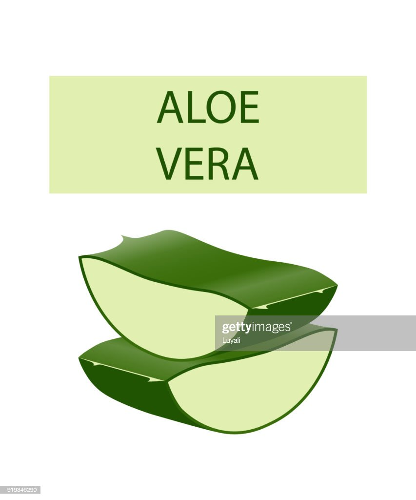 Aloe vera plant leaves cut isolated on white.