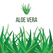 Aloe Vera poster with text. Herbal medicine