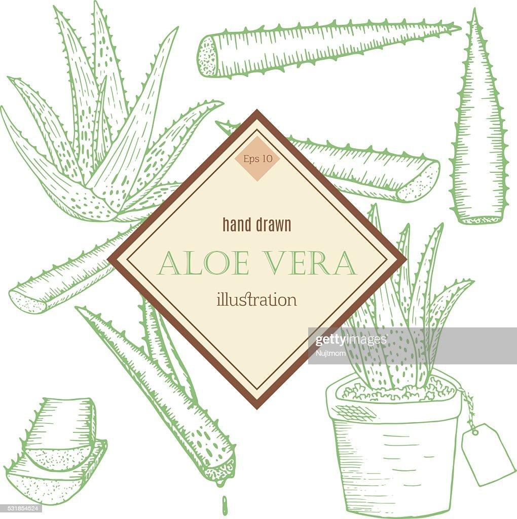 Aloe Vera set