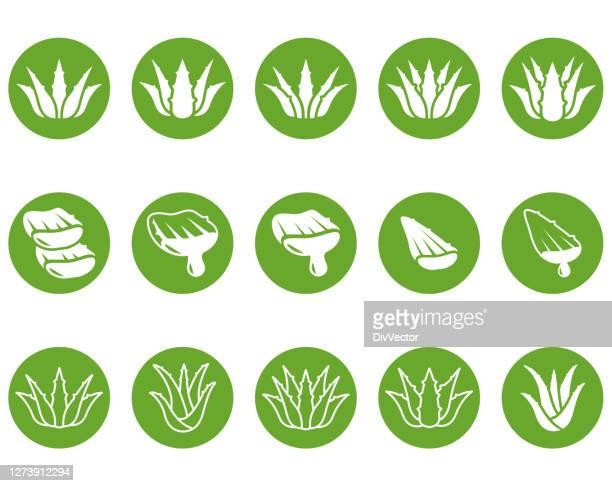 aloe vera vector icon - aloe stock illustrations