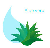 Aloe vera vector on white background.Beauty cosmetic ingredient illustration
