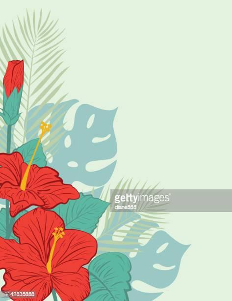 illustrations, cliparts, dessins animés et icônes de aloha hawaiian party invitation avec des fleurs d'hibiscus - hibiscus