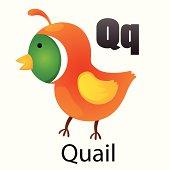 Alphabet Q with Quail