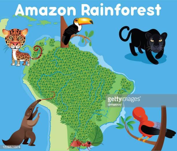 ilustrações, clipart, desenhos animados e ícones de floresta amazônica e animais amazônicos - anteater
