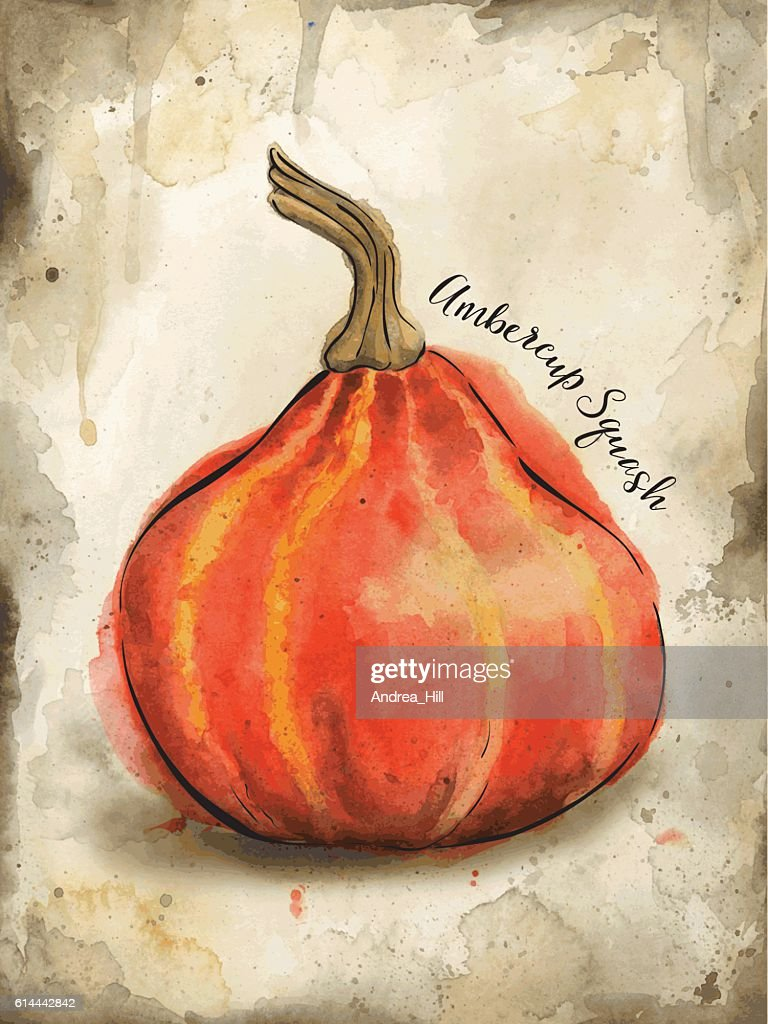 Ambercup Squash Painted in Watercolor - Vector Illustration