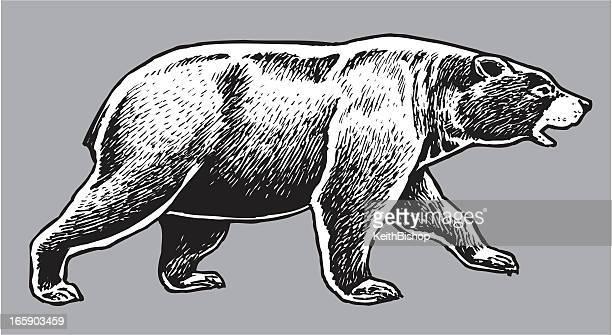 illustrations, cliparts, dessins animés et icônes de ours noir américain-animaux sauvages - ours