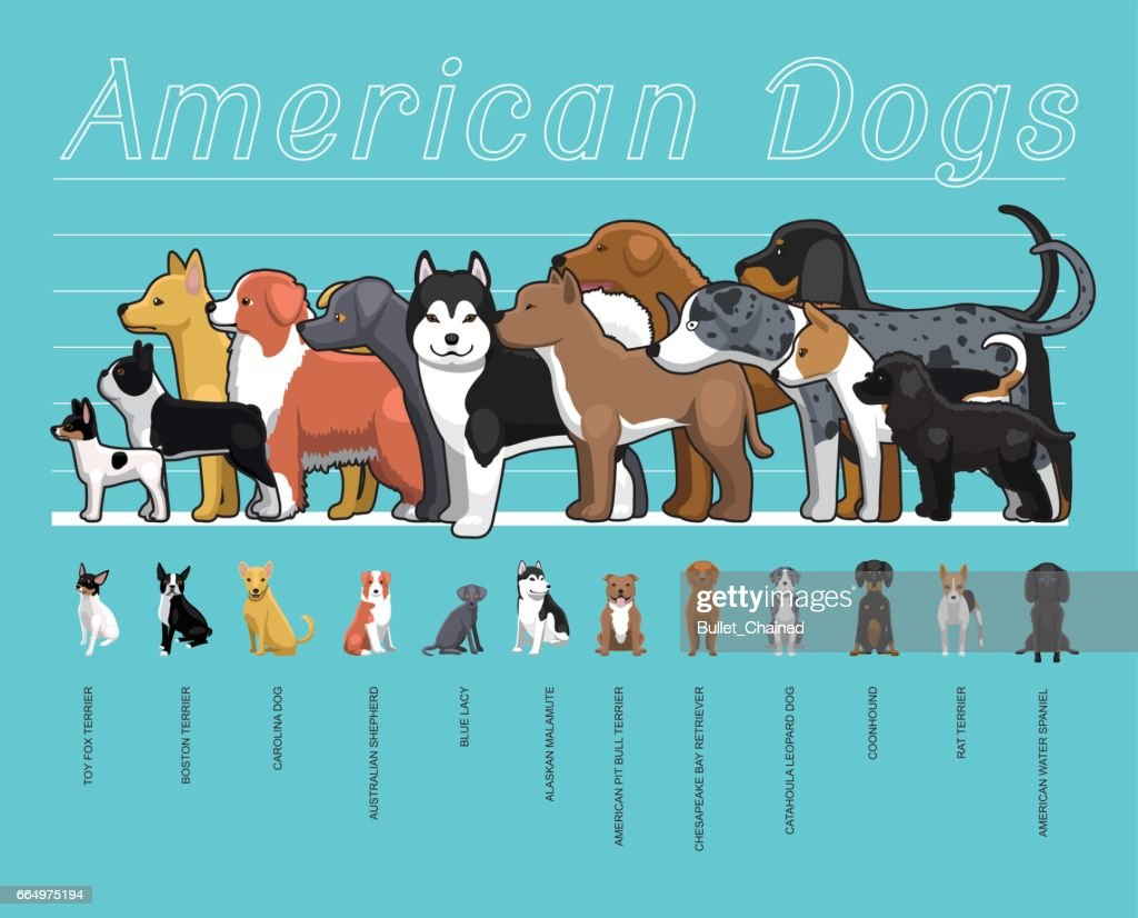 American Dogs Size Comparison Set Cartoon Vector Illustration
