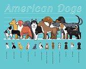 American Dogs Size Comparison Set Cartoon Vector Illustration