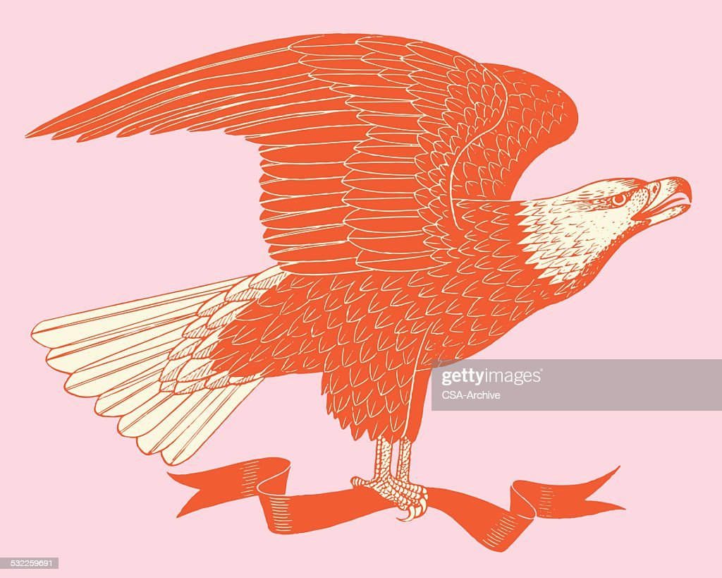 American Eagle and Banner : Stock Illustration