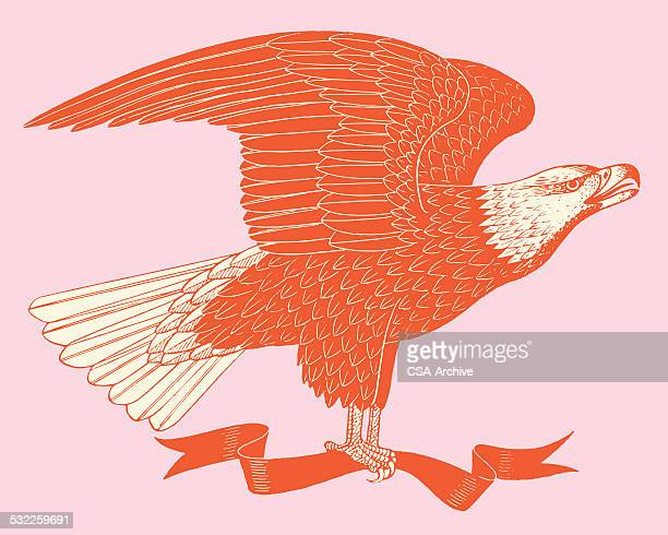 american eagle and banner - bald eagle stock illustrations