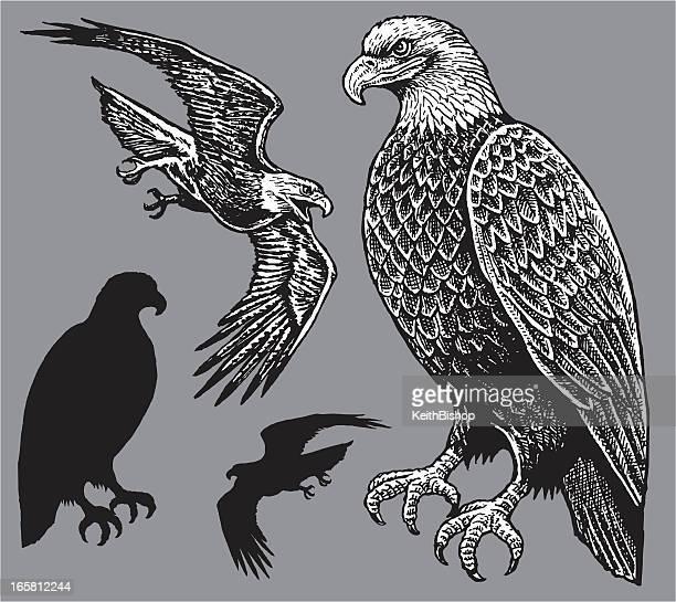 illustrazioni stock, clip art, cartoni animati e icone di tendenza di american eagle-uccello - pen and ink