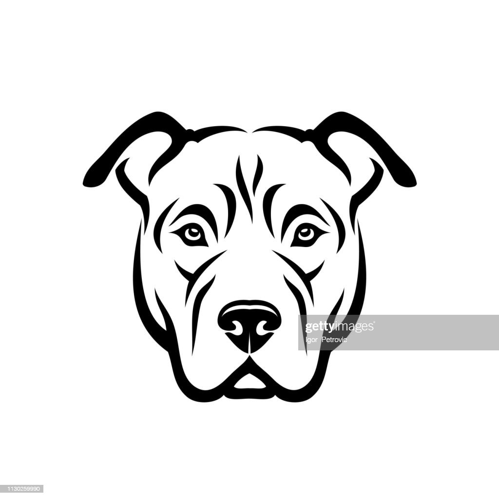 American Pitbull Terrier dog - isolated vector illustration