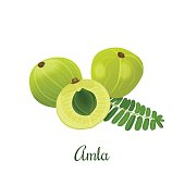 Amla fruit vector illustration. Indian gooseberry, Malacca tree, or amalika. Edible fruit