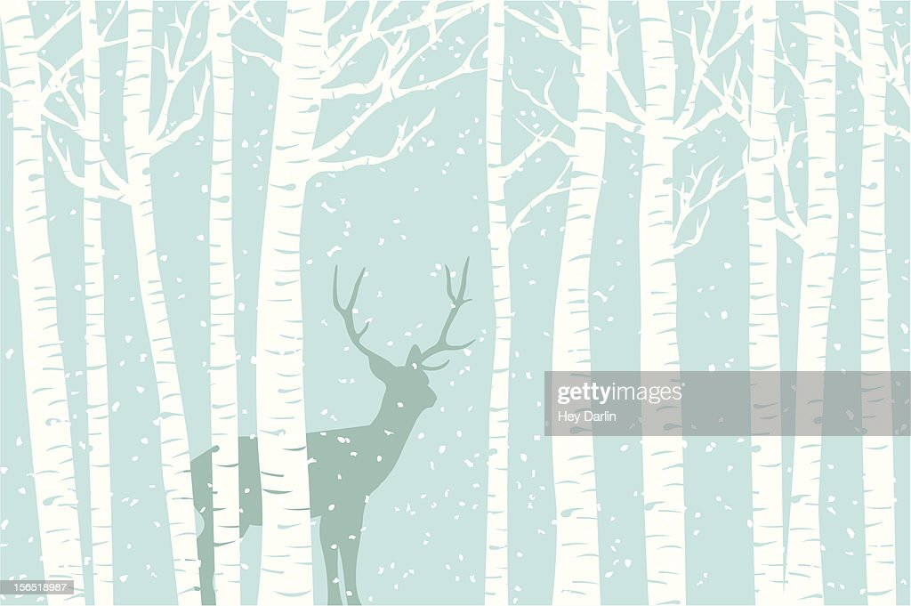 Among the Birch : stock illustration