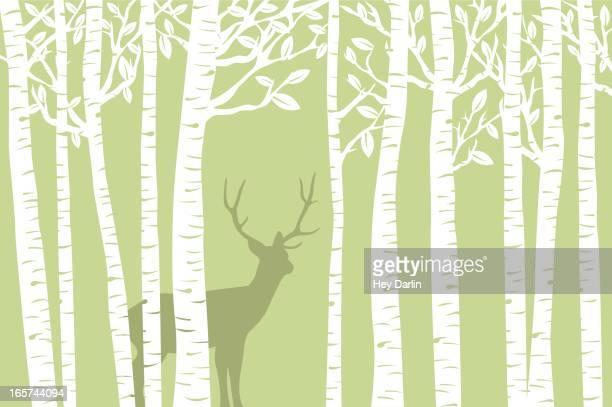 Among the Birch (Green)