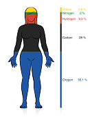 Amount of the most common chemical elements oxygen, carbon, hydrogen and nitrogen in the human body with percent of mass information that compose a normal weight woman. Vector illustration on white.