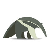 an Anteater