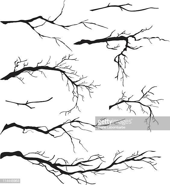 an assortment of bare tree isolated branches silhouettes - tree stock illustrations