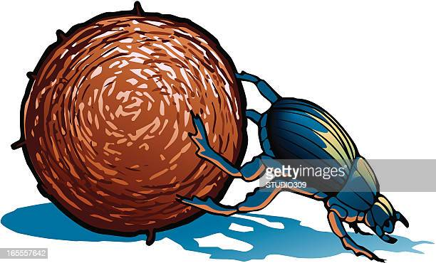 An illustration of a blue dung beetle