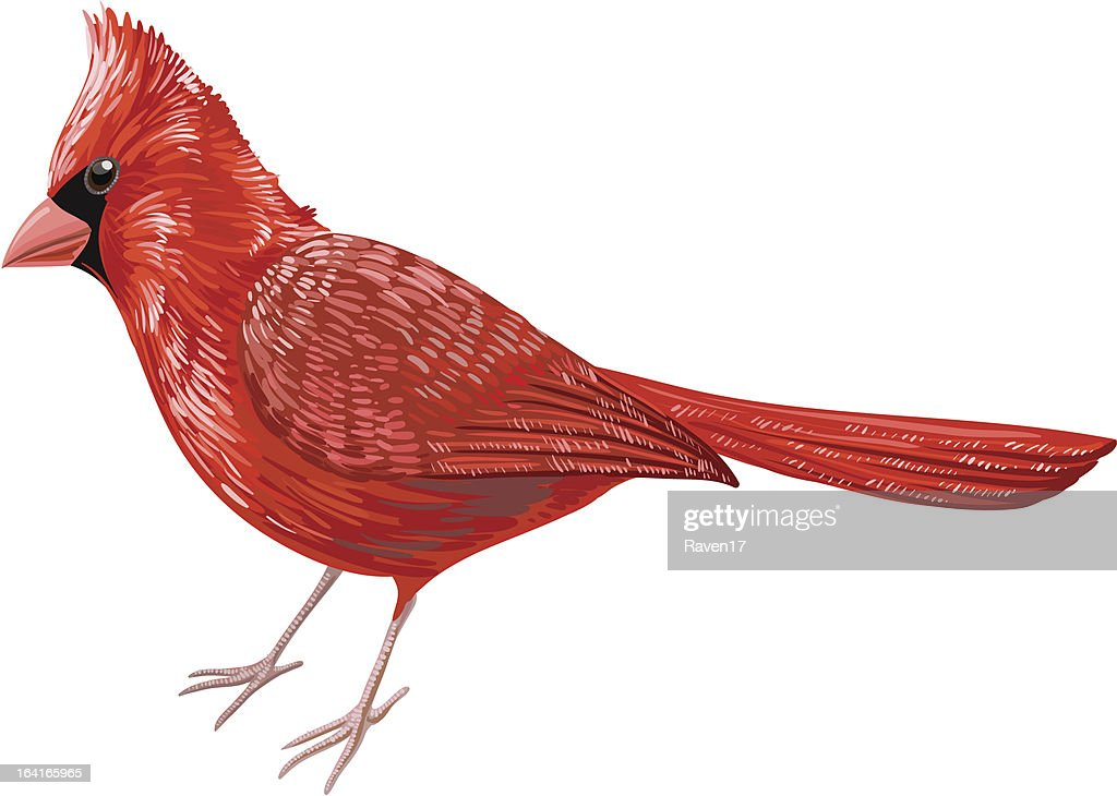 An illustration of a Cardinal Bird on a red background