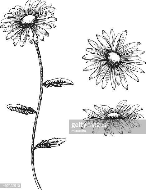 an illustration of a daisy in black and white - daisy stock illustrations, clip art, cartoons, & icons