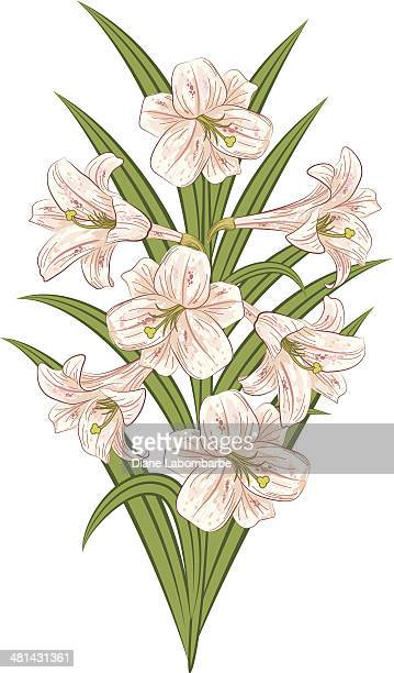 an illustration of a pink easter lily bouquet on white. - easter lily stock illustrations