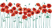 An illustration of a row of poppies