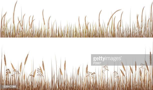 an illustration of dry grasses - tall high stock illustrations